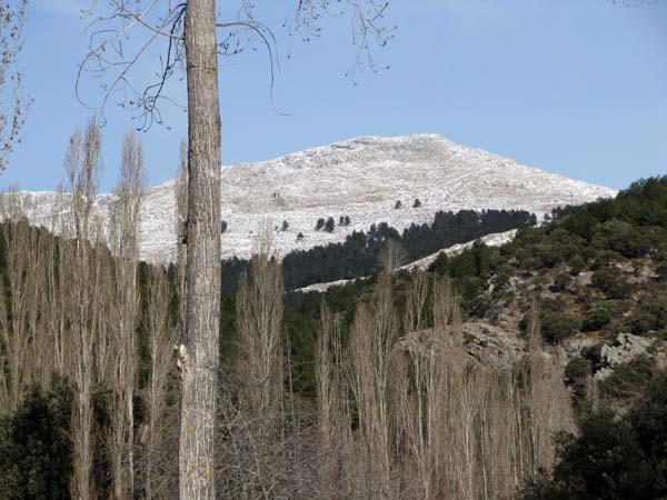 Pico del Almorchón