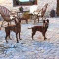 casa rural que admite mascotas en Santiago-Pontones