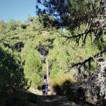 Cerca de Fuente Segura