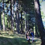 Bosque de pinos en Pontones