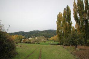 El Cerezo