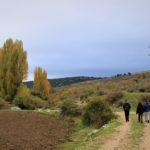 Huerta de El Cerezo